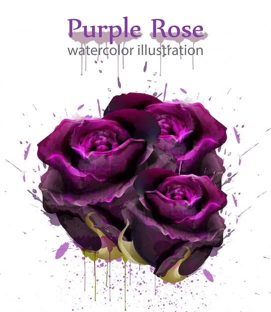 Roses aquarelle Vecteur Premium