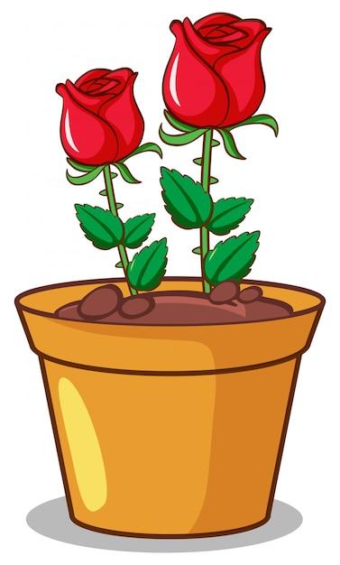 Roses Rouges Sur Fond Blanc Vecteur gratuit