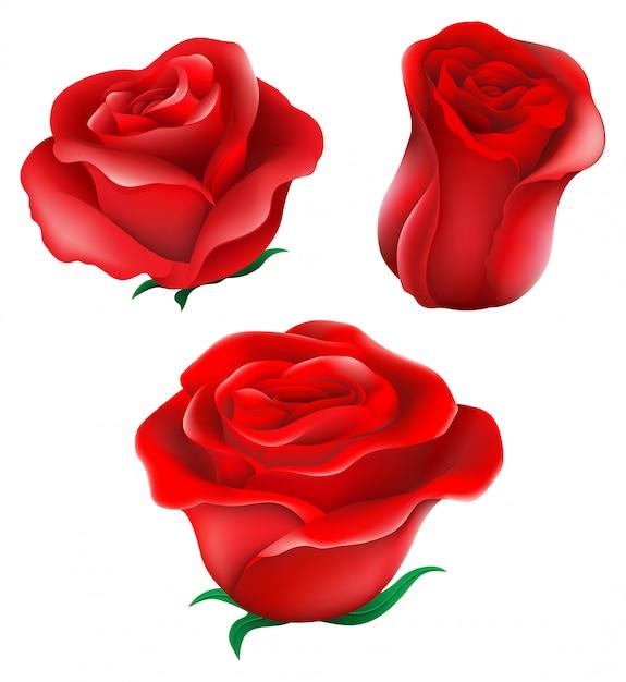 Roses rouges Vecteur gratuit