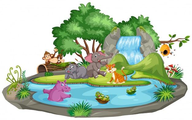 Scène d'animaux et étang Vecteur Premium