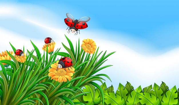 Scène avec des coccinelles volant dans le jardin Vecteur gratuit