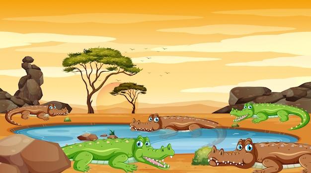 Scène Avec Des Crocodiles Dans L'étang Vecteur gratuit