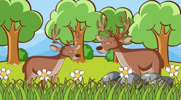 Scène Avec Deux Cerfs Dans La Forêt Vecteur gratuit