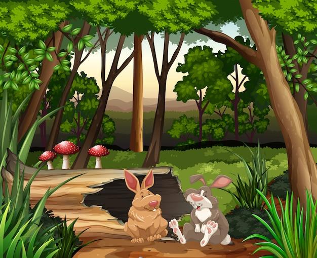 Scène avec deux lapins en forêt Vecteur gratuit
