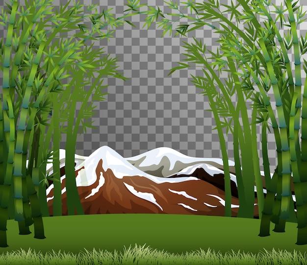 Scène De Forêt De Bambou Avec Fond Transparent Vecteur gratuit