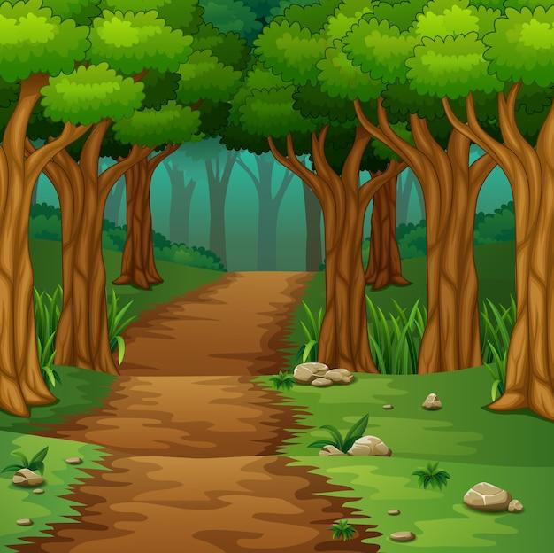 Scène de la forêt avec chemin de terre Vecteur Premium