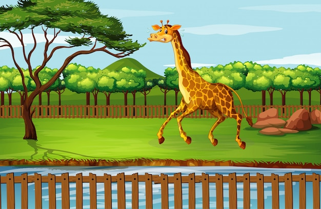 Scène avec girafe au zoo Vecteur gratuit