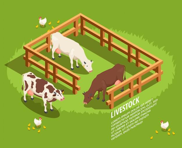 Scène isométrique de bétail Vecteur gratuit