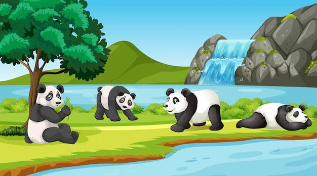 Scène avec des pandas mignons dans le parc Vecteur gratuit