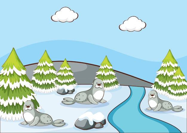 Scène avec des phoques en hiver Vecteur gratuit