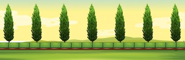 Scène de pins dans le parc Vecteur gratuit