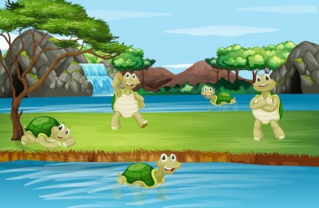 Scène avec tortue au parc Vecteur gratuit