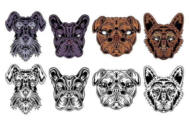 Schnauzer miniature de visage de chien, bouledogue français, carlin, style rétro vintage berger. Vecteur Premium