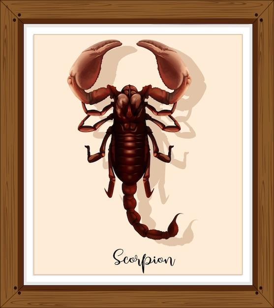 Scorpion Sur Cadre En Bois Vecteur gratuit