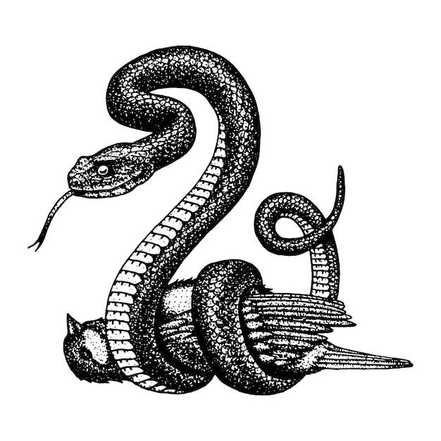 Serpent Vipère. Serpent Cobra Et Python, Anaconda Ou Vipère, Royal. Main Gravée Dessinée Dans Un Vieux Croquis, Style Vintage Pour Autocollant Et Tatouage. Ophidien Et Asp. Vecteur Premium
