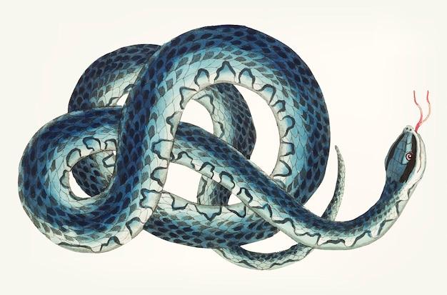 Serpent de wampum dessiné à la main Vecteur Premium