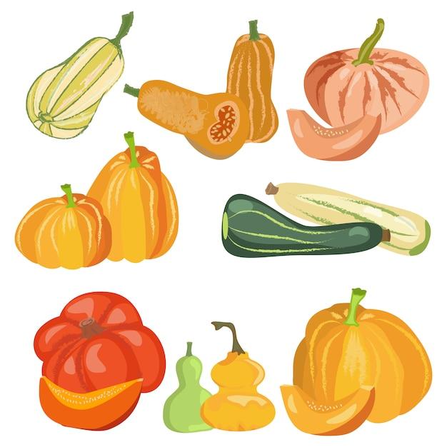 Set citrouilles nature nourriture jour récolte thanksgiving. Vecteur Premium