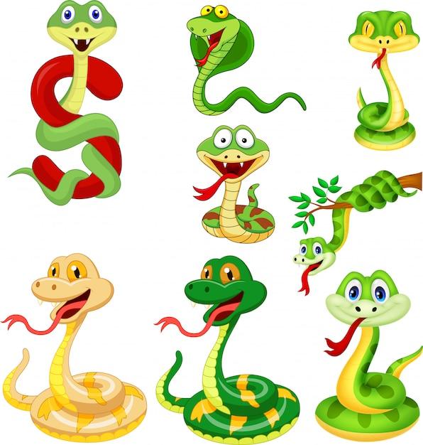 Set de collection serpent Vecteur Premium