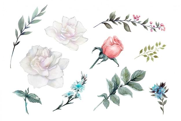 Set de design vintage vecteur aquarelle roses roses. Vecteur Premium