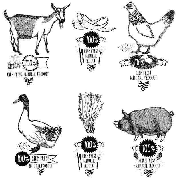 Set farm fresh produit naturel poulet goat duck pig Vecteur gratuit