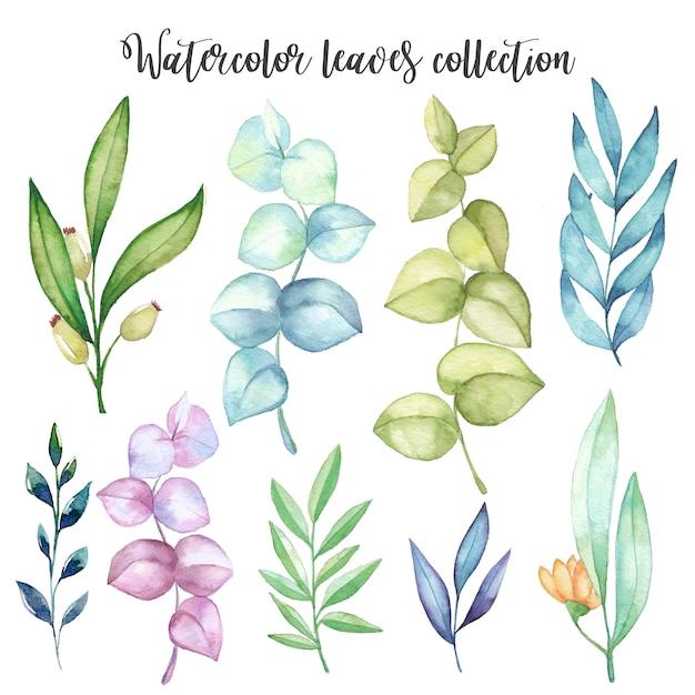 Set de feuilles d'aquarelle Vecteur Premium