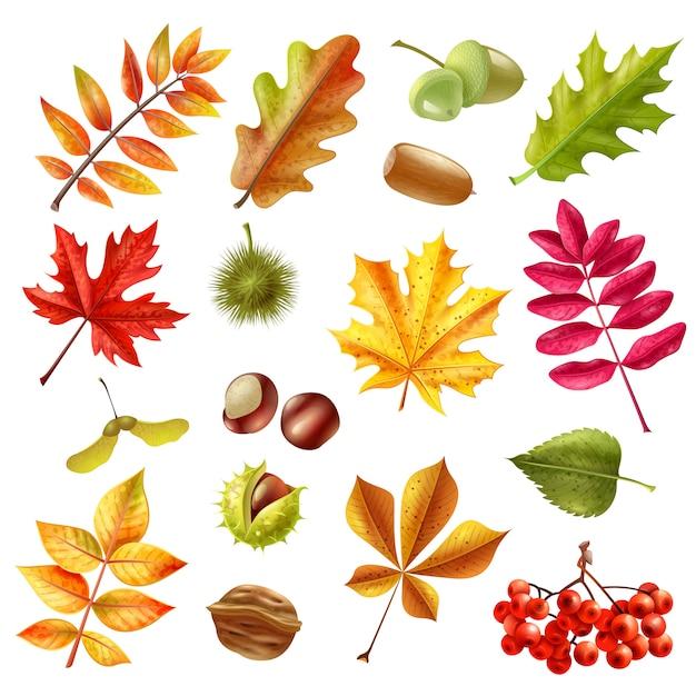 Set de feuilles d'automne Vecteur gratuit