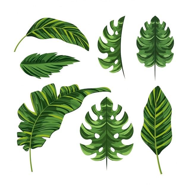 Set de feuilles exotiques de palmier tropical Vecteur Premium