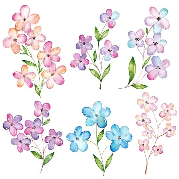 Set de fleurs aquarelle, fleur de cerisier Vecteur Premium