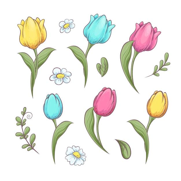 Set fleurs tulipes Vecteur Premium