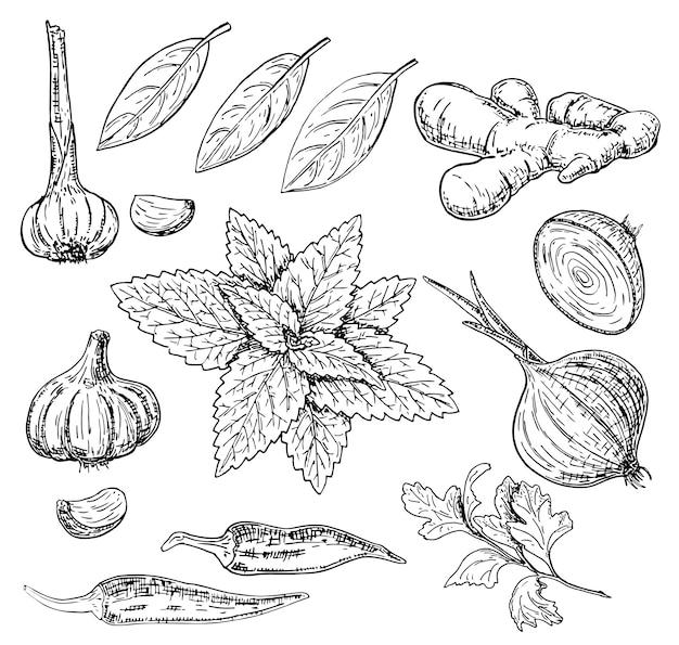 Set d'herbes et d'épices culinaires dessinés à la main de vecteur Vecteur Premium