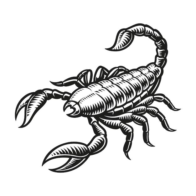 Signe Du Zodiaque Scorpion Isolé Sur Blanc Vecteur Premium