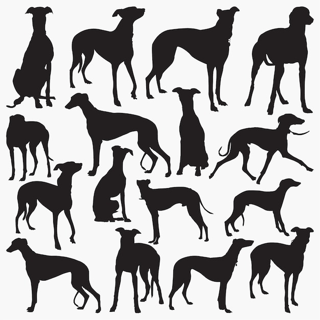 Silhouettes grey hound Vecteur Premium