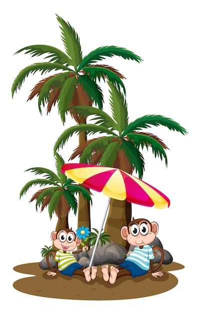 Singes sous les cocotiers Vecteur gratuit