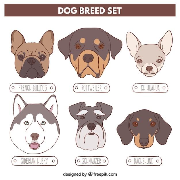 Sketches variété de chiens Vecteur gratuit
