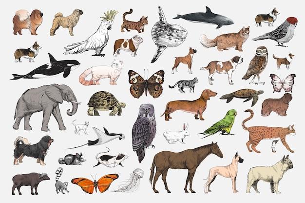 O Dog Hairstyle: Style De Dessin D'illustration De Collection D'animaux