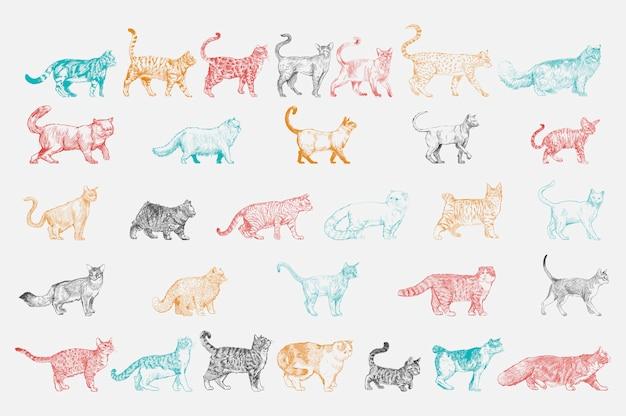 Style de dessin d'illustration de la collection de races de chats Vecteur gratuit