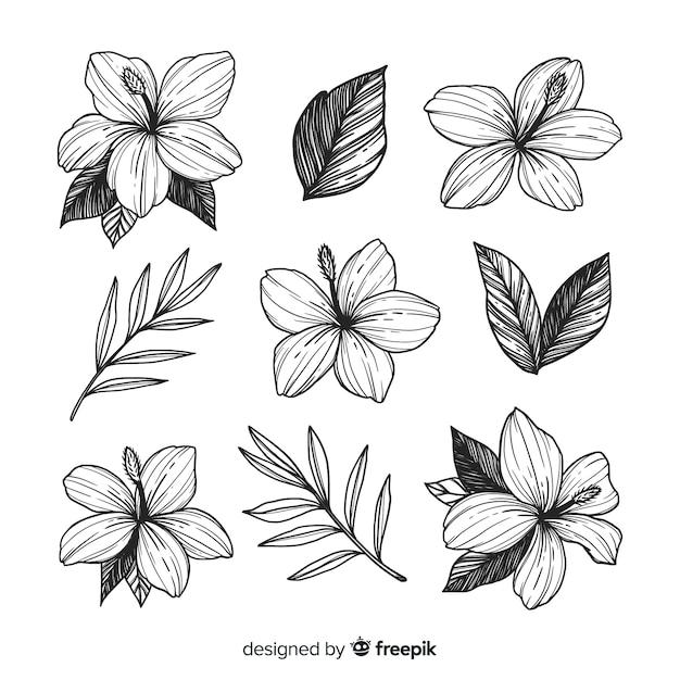 Style dessiné à la main de belles fleurs Vecteur gratuit