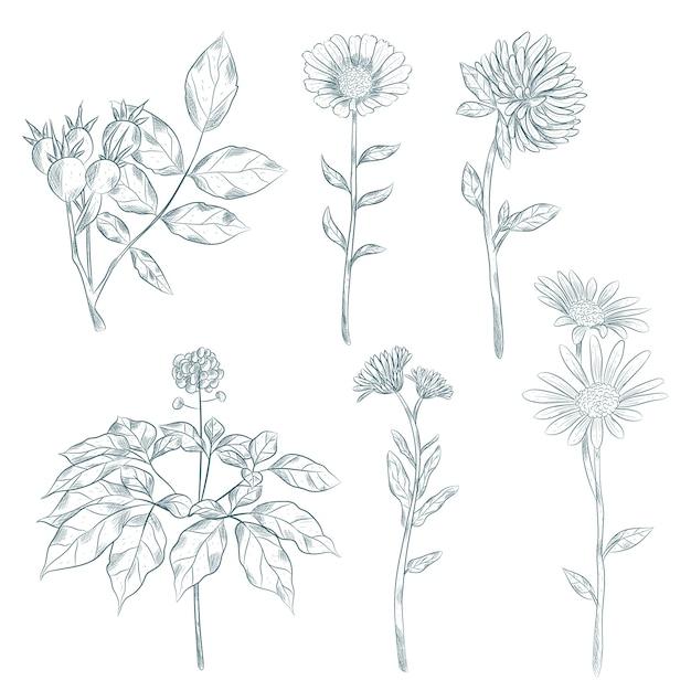 Style vintage d'herbes et de fleurs botaniques Vecteur gratuit