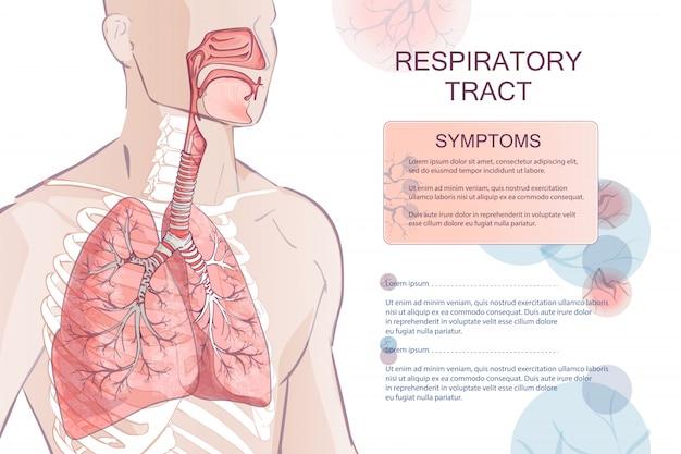 Système respiratoire humain de vecteur Vecteur Premium