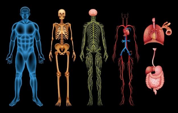 Systèmes du corps humain Vecteur Premium