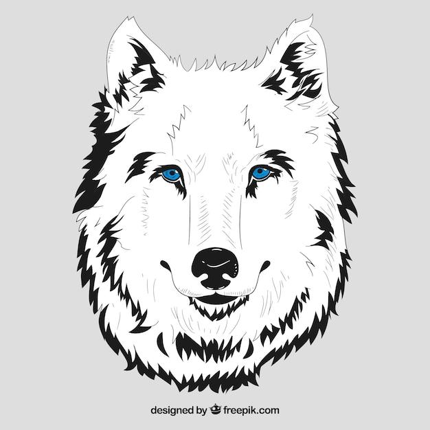 T te blanche de loup aux yeux bleus t l charger des - Tete de loup dessin ...
