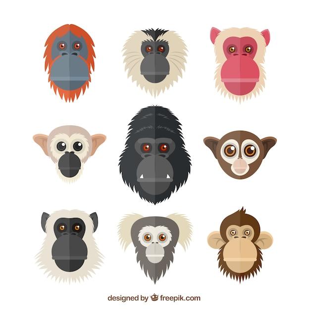 Têtes de primates Vecteur gratuit