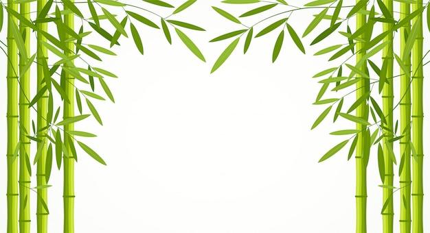 Tiges de bambou vert avec des feuilles isolés sur fond blanc. Vecteur Premium