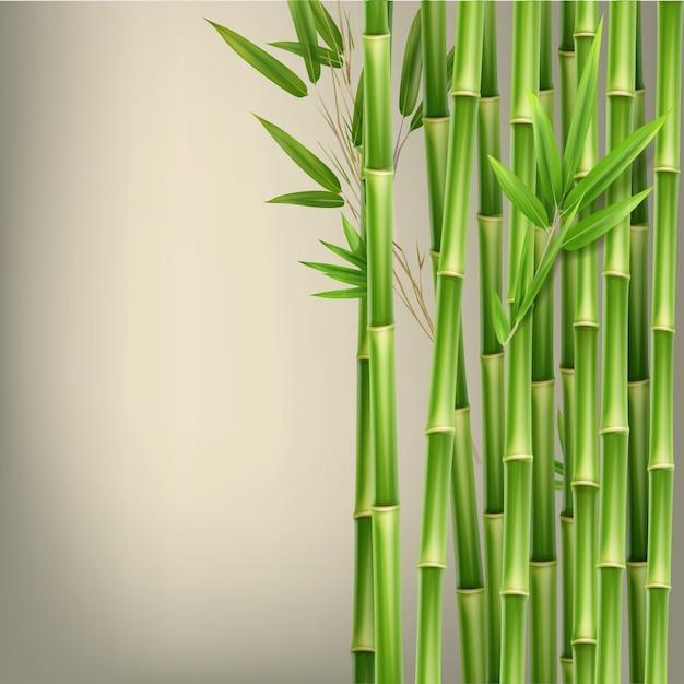 Tiges Et Feuilles De Bambou Vert De Vecteur Isolés Sur Fond Beige Avec Espace De Copie Vecteur gratuit