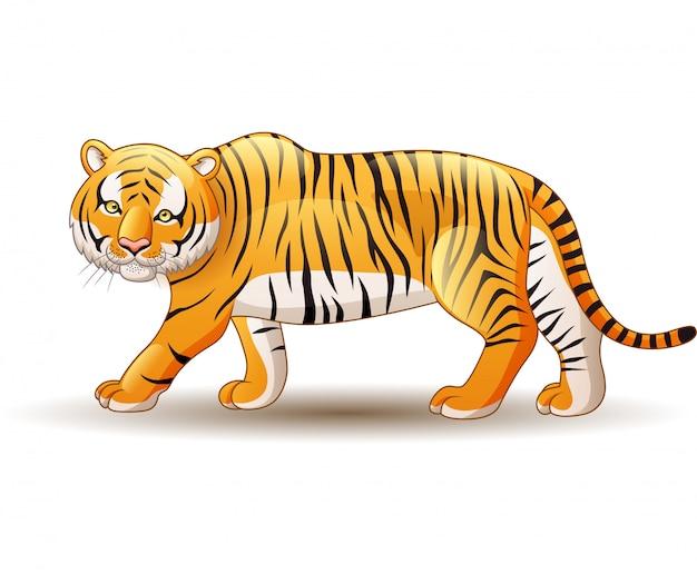 Tigre isolé sur fond blanc Vecteur Premium