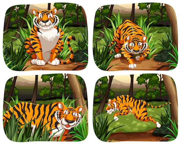 Tigre vivant dans l'illustration de la jungle Vecteur gratuit