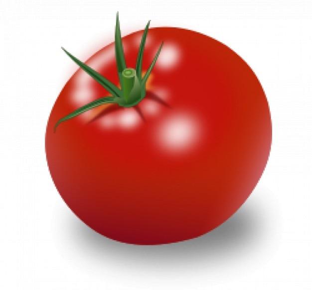 Tomate vecteur de fruits rouges t l charger des vecteurs gratuitement - Tomate est un fruit ...