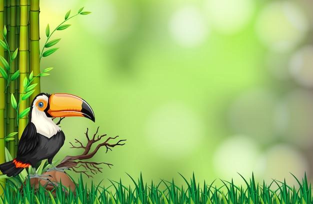 Toucan dans le fond de la nature Vecteur Premium