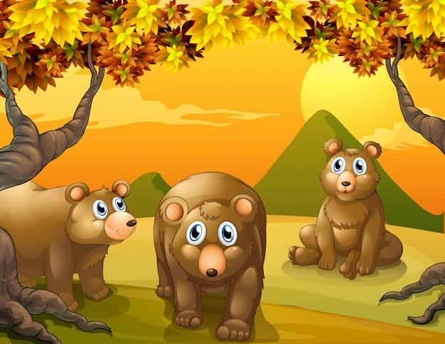 Trois ours bruns Vecteur gratuit