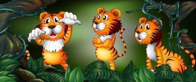 Trois tigres dans la forêt tropicale Vecteur gratuit